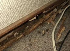 シロアリに食われて壁や床がボロボロになっていました。