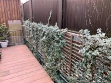 木製のフェンスは、植物が絡み、劣化も進んでいました。